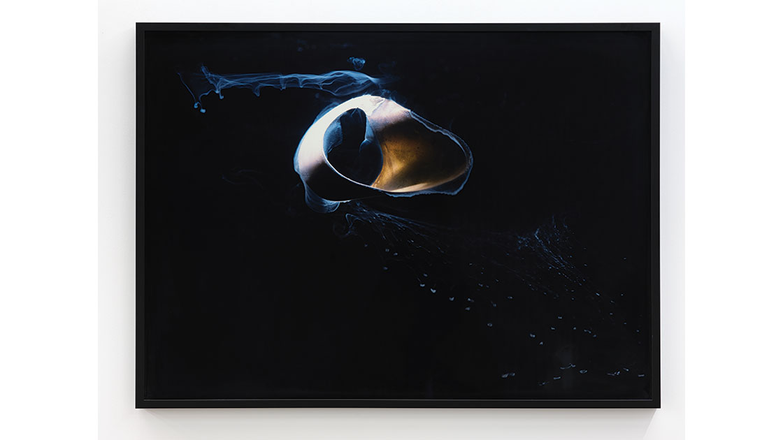 """Joyce Campbell, """"Ryuku II,"""" 2003-11, fujiflex crystal archive photograph, framed museum glass, 905 x 1230 mm, edition 1 of 7, courtesy Two Rooms"""