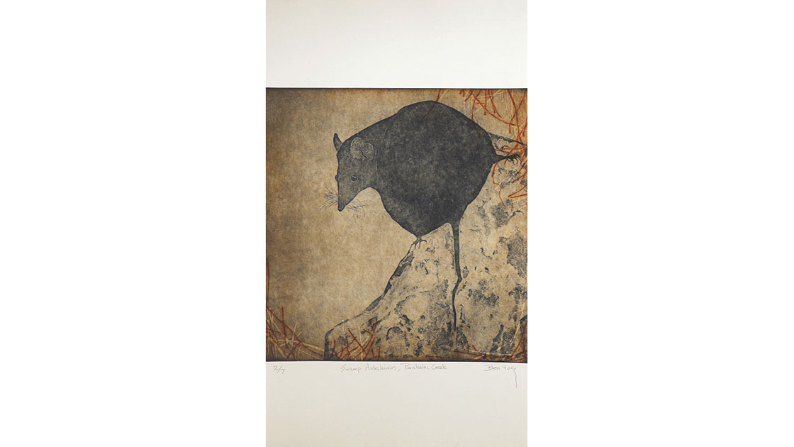 Bron Ives, Swamp Antechinus, Painkalac Creek,  three plate etching,  53 x 39 cm, courtesy the artist and Queenscliff Gallery